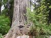 "<FONT COLOR=""yellow"">Big Tree:</FONT> Guy!"