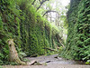 """<FONT COLOR=""""yellow"""">Fern Canyon:</FONT> Fern Canyon can be reach by several 4 or 5 mile hiking trails or an 8 mile narrow & bumpy gravel road!"""