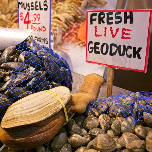 Geoduck anyone?