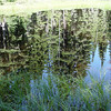 Reflections...<br /> One of the countless ponds & pools we passed along the way