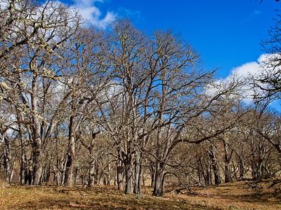 Soda Springs Wildlife Management area - Homestead Springs