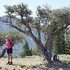 """Nancy & Curlleaf Mountain Mahogany <A HREF=""""http://www.malag.aes.oregonstate.edu/wildflowers/species.php/id-920"""">Cercocarpus ledifolius</A>"""