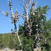 The Mitchell Shoe Tree on the side of HWY 26