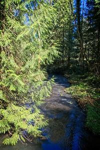 Tickle Creek Trail