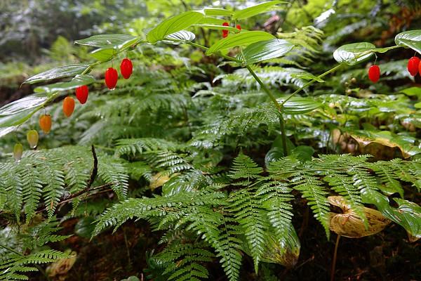 A Summer Rain Forest.