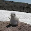 Maddy's Snowman <FONT SIZE=1>© Chiyoko Meacham</FONT>