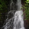"<B>Coopey Creek - <A HREF=""http://guy.smugmug.com/keyword/Upper Coopey Falls"">Upper Coopey Falls</A></B> Coopey Falls are about 1 mile up the Angels Rest Trail. <FONT SIZE=1><A HREF=""http://www.waterfallsnorthwest.com/nws/waterfall.php?st=&num=1918"" TARGET=""_blank"">Northwest Waterfall Survey</A></FONT>"