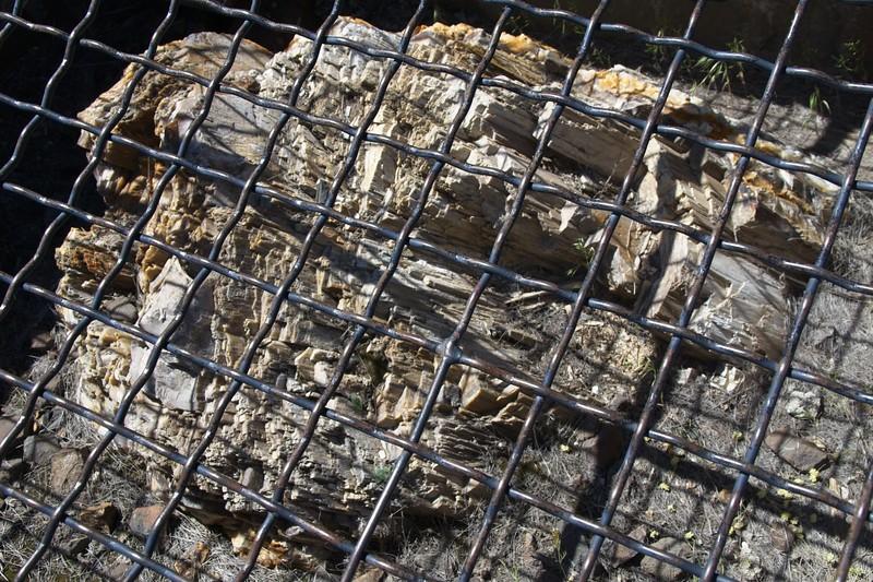 Petrified Tree Zoo