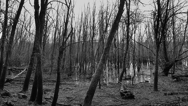 Portland - Sellwood Loop © Chiyoko Meacham