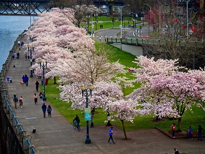 Portland Hanami 2021/04/01