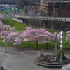 After the race we walked over to waterfront park to check out the Cherry Blossom.