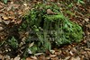Brightly colored moss covered tree stump - Hocking Hills State Park located in Ohio - Sunday, October 3, 2010
