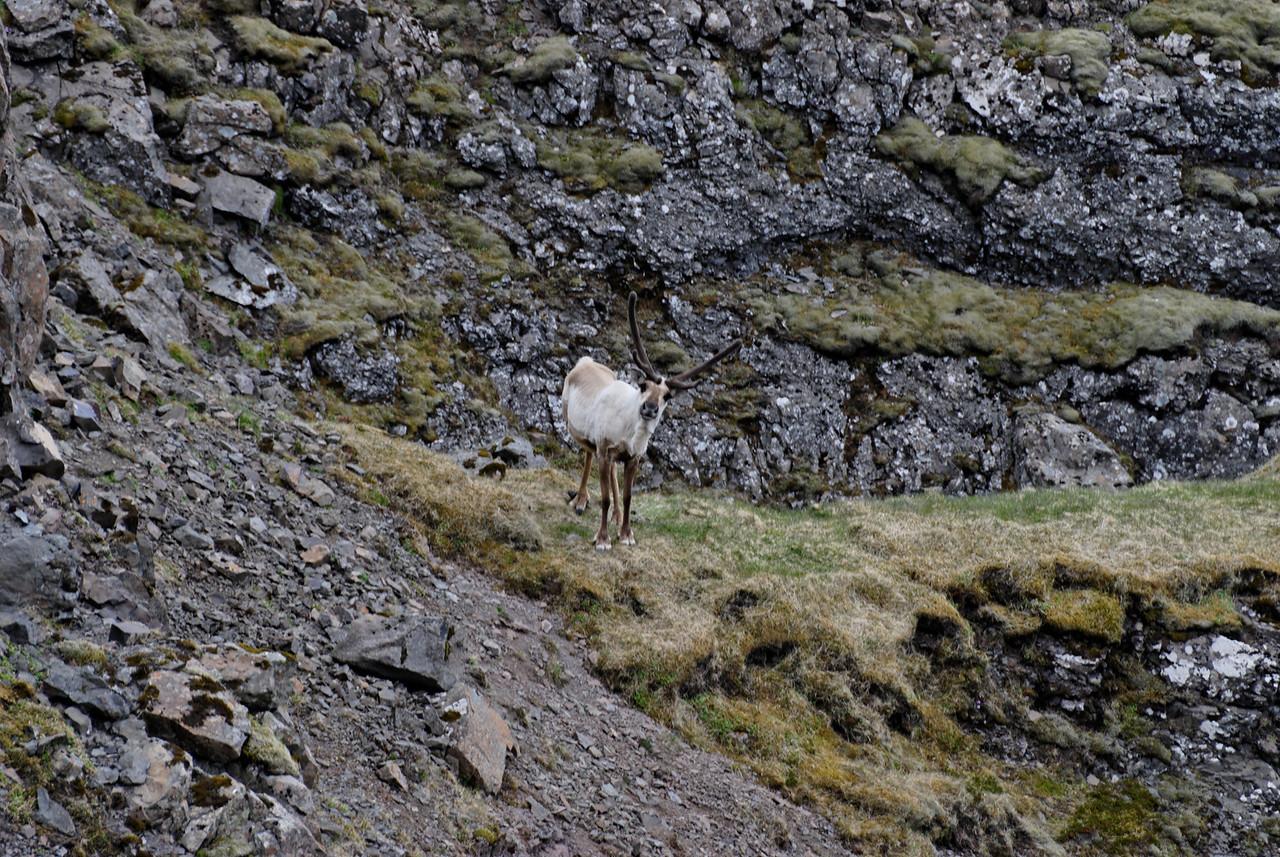 10:41 Fljótlega komum við auga á þetta hreindýr.