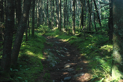the verdant summit of a mountain whose name I forgot; Long Trail, Vermont.