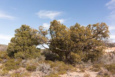 Interesing trees