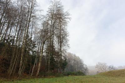 Wait, fog again…