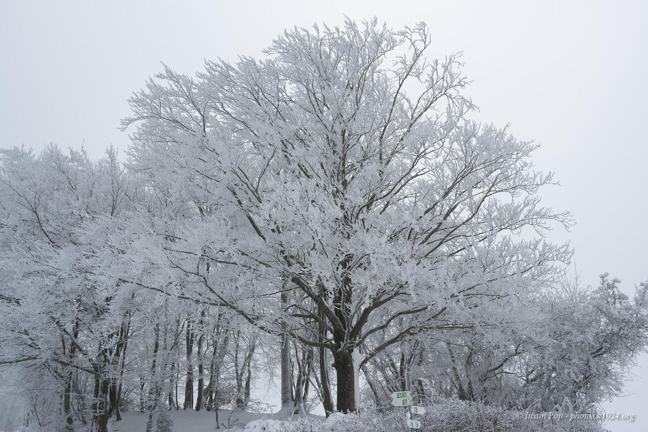 ... and frost