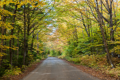 Ravine Lodge access road, in full fall colors.