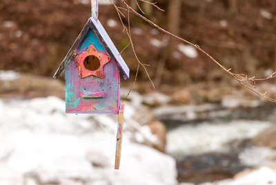 A child's birdhouse dangles from a tree branch over Hewes Brook, near our home.