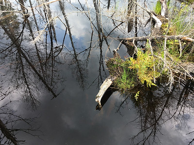 Reflections on a beaver pond.