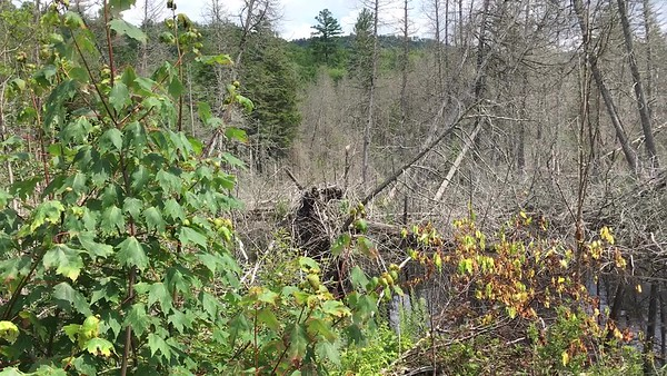 A peaceful scene at this trailside beaver pond. (Turn up the volume.)
