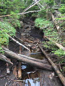 Horrible erosion along the trail to Cliff Mountain.