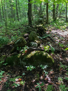 An ancient stone wall marks a line through the woods near Grant Brook.