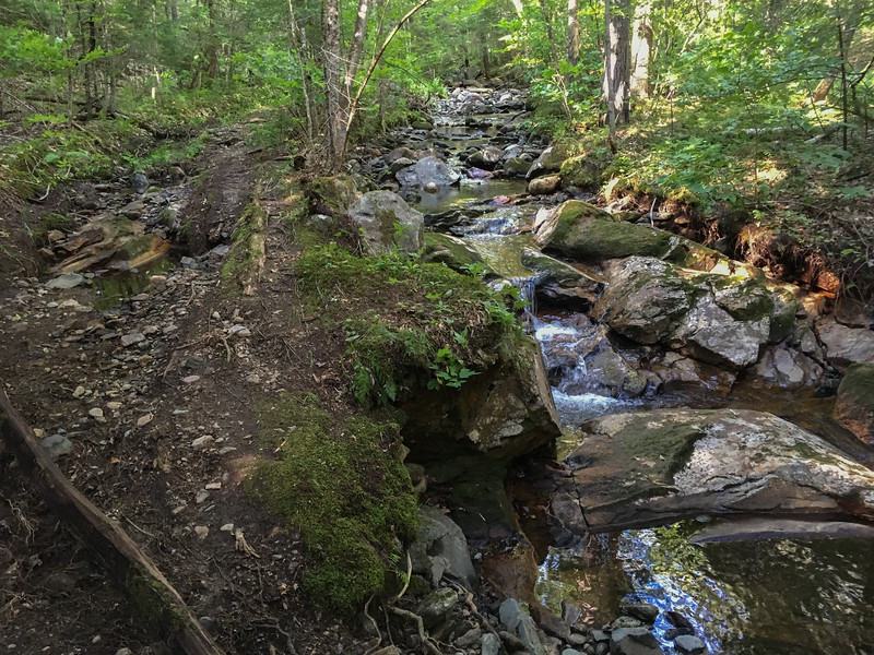 The Ranger Trail spends some time following the main branch of Grant Brook.