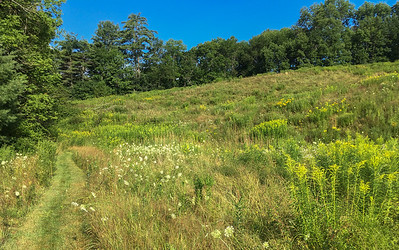 The Grant Brook trail passes through a farmer's meadow.