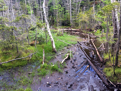 Crossing a bog on the Panther-Couchsachraga ridge.