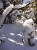 Often, the local snowshoe hares gave me hints about the best path to follow.