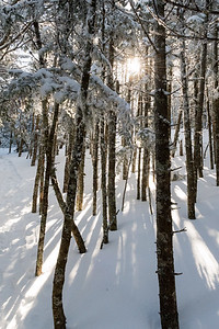 The sun breaks over the ridge and through the trees along the Glencliff Trail on Moosilauke.