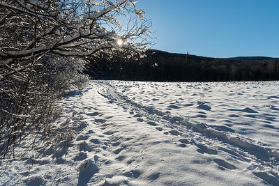 Early April on the Glencliff Trail to Moosilauke - the day after a small powdery snowstorm.