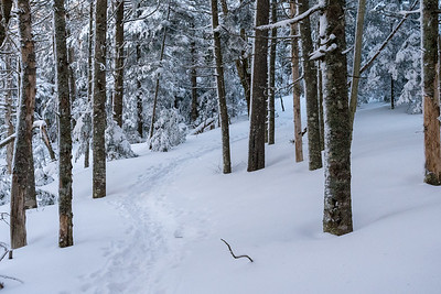 Fresh powder decorates the Glencliff Trail on Moosilauke before the sun arrives.