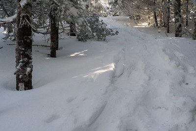 The snow is so deep as to obscure the AT blaze (at left), near the top end of the Glencliff Trail on Moosilauke.