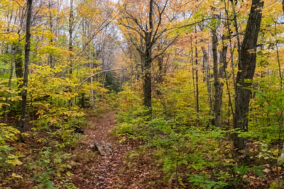 Hiking from Glencliff to the Lodge via the Hurricane Trail.