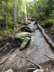 Heavy erosion on the Seymour herd path.