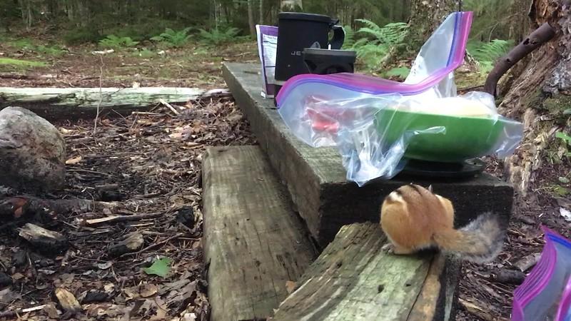A chipmunk visits me during dinner at camp.