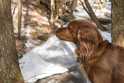 Finney examines the frozen Whipple Brook.