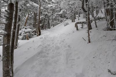 Glencliff Trail, Mount Moosilauke.
