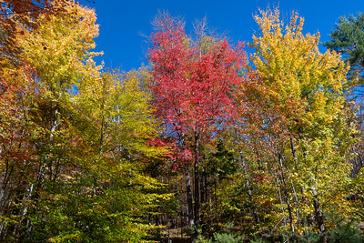 The fall colors are bursting forth this week.