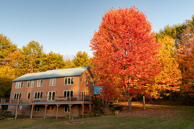 The trees around our home in their fall foliage; Lyme NH.