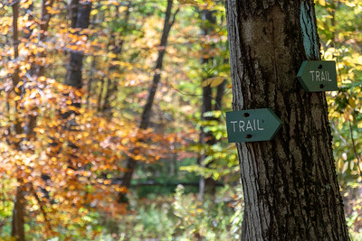 The town of Lyme marks a trail through the woods.