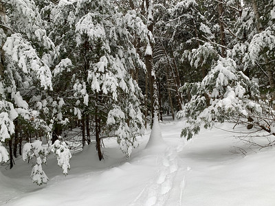 Snowshoeing through the woods near home.