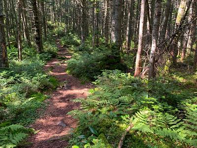 The Ridge Trail can be very pleasant as it follows the ridge.