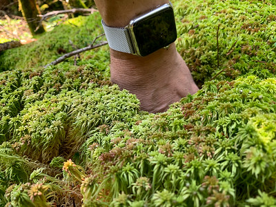 Deep moss coats the forest floor, in the upper reaches of Gorge Brook.