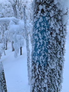 The blue blazes of the Pico Peak trail are covered in hoar frost.