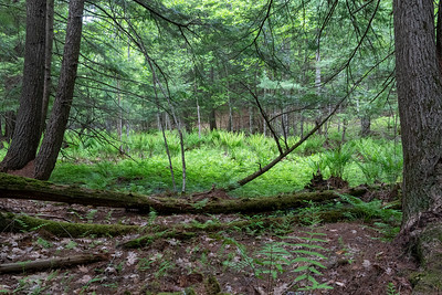 May 29: A vernal pool near home.