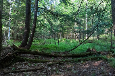 May 24: A vernal pool near home.