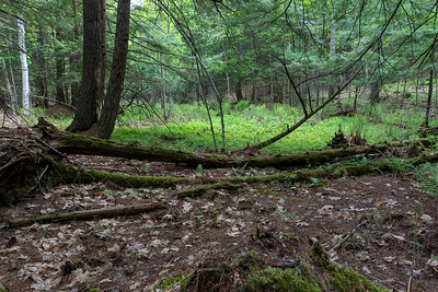May 22: A vernal pool near home.